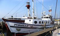 forelle_ms1600
